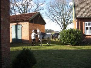 k-Pferde3 am Hof